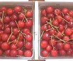 cherry003
